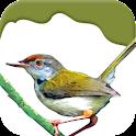 Atlas: Birds of Planet Earth icon