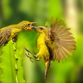 Prepare for landing by Roy Husada - Animals Birds