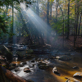 Breakthrough by Patrick Flood - Landscapes Forests ( water, fantasy, vertical, photosbyflood, forest, light beams, sunlight, landscape, national prk, smoky mountains, sun rays )