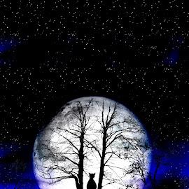 black cat on tree by Nina Ficur Feenan - Digital Art Animals ( cat, spooky, night, full moon, black cat, halloween, nightscape )