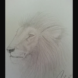 Big Cats by Paula Moore - Drawing All Drawing