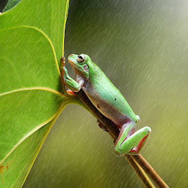 Looking Around by Andri Priyadi - Animals Amphibians
