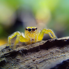 little yellow jumper by Hendrata Yoga Surya - Instagram & Mobile Android