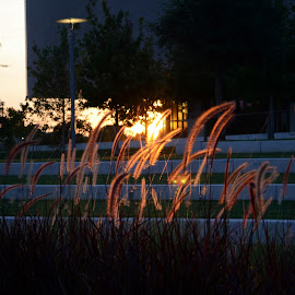 Sunset by Mary Beth Schepper - Nature Up Close Other plants ( grasses, sunset, buildings, architecture )