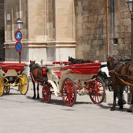 Public Carriages in Palma by William Graf - Transportation Other ( buggy, carriage, horse, majorca, palma )
