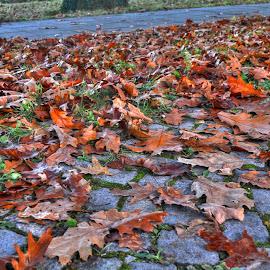 by Gordana Trošić-Kliska - Nature Up Close Leaves & Grasses ( autumn, fall, leaves )