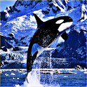 Killer Whale Sound Effects icon