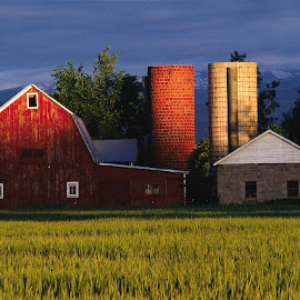 Old Barn and Silos by Robert Castellino - Buildings & Architecture Other Exteriors ( farm, americana, farms, farmland, sunrise, silo )