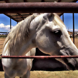 Patient at the High Desert Equine Clinic, Colorado by Rhonda Musgrove - Animals Horses ( equine, clinic, horse, colorado, high desert )