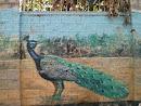 Peacock Wall Mural