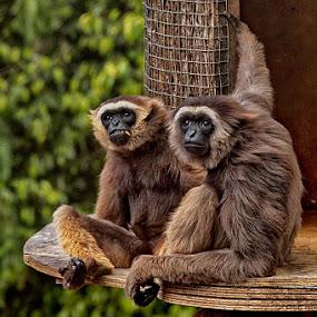 Happy couple by Radu Eftimie - Animals Other Mammals (  )