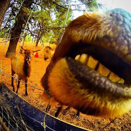 Smile for me by Joe Thola - Instagram & Mobile Instagram ( #libertylakewa #elkfarm #goproheroblackedition #gopro #beahero #gopropnw )