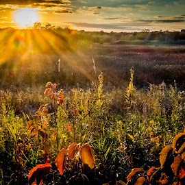 Illinois Prairie Sunset by John Schwartz - Landscapes Prairies, Meadows & Fields