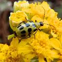 Longhorned beetle?