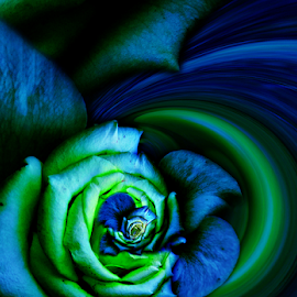 LIGHT IN THE DARKNESS by Carmen Velcic - Digital Art Abstract ( abstract, blue, green, roses, flowers, digital, light, darkness )