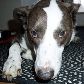 Good Dog by Lori Fix - Animals - Dogs Playing