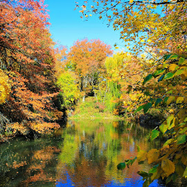 Fall in NYC by Sharon Ruggiero - Landscapes Waterscapes ( water, fall colors, autumn, colors, fall, trees, nyc, central park, leaves, pond, falling leaves )