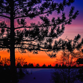 Winter Colors by Jackie Hartleben - Landscapes Sunsets & Sunrises ( winter, nature, tree, snow, weather, landscape )
