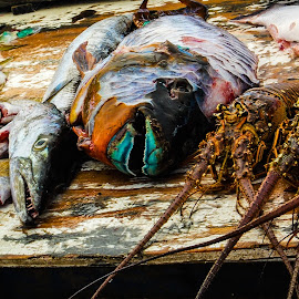 Market Fresh by Matt Meyers - Food & Drink Meats & Cheeses ( grand cayman, vacation, fish, equinox, cruise )