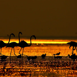 Amazing Sunset by Nikhil Jahagirdar - Landscapes Sunsets & Sunrises ( amazing, of, nature, diamonds, pearls, sunet, shining, beauty, landscape, birds, golden )