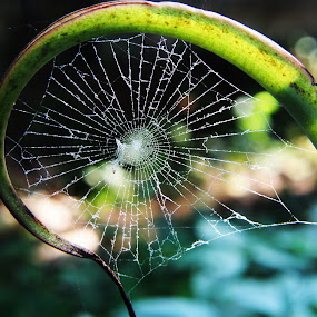 spider web by Ad Har - Nature Up Close Webs