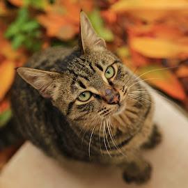 by Deniz Özmen - Animals - Cats Portraits ( orange, cat, green, yellow, leaf,  )
