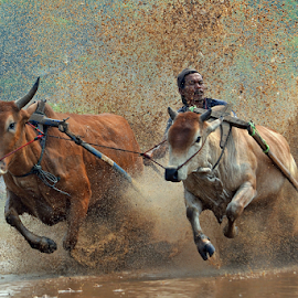 by Alhas Kasidatur Ridhwan - Sports & Fitness Rodeo/Bull Riding