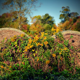 Round bales of hay by Tricia Scott - Landscapes Prairies, Meadows & Fields ( countryside, farm, autumn, fall, hay, flowers )