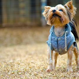 Doggie by Sazar De Bruin - Animals - Dogs Playing ( dog )