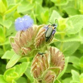 beetle on wild flowers by Dhruv Maldikar - Instagram & Mobile Android
