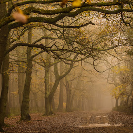 Fog by Marie Parish - Landscapes Forests ( eerie, autumn, trees, forest, woods )