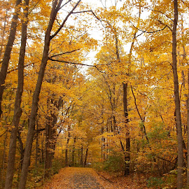 The path by Peggy Hogsett - Landscapes Forests ( reds, color, seasons, fall, trees, brown, yellow, leaves, woods, brown nature, colorful, nature )