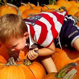 Harvest Festival by Robin Amaral - Babies & Children Children Candids ( farm, child, pumpkin patch, farmers market, new england, autumn, pumpkins, boy, halloween )