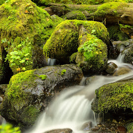Over the Edge by Jayme Spoolstra - Landscapes Forests ( olympic, park, pnw, brook, green, national, moss, pacific, forest, northwest, north, leaves, rainforest, creek, fall, wa, rocks, rain, river )