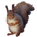 Squirrel Sitting Sticker icon