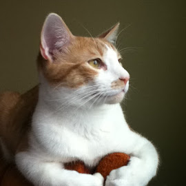 Posing by James Timmer - Animals - Cats Portraits