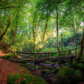 This is Ireland by Jamie Ryan - Landscapes Forests ( water, ireland, forrest, nature, hdr, autumn, nikon d810, irish, bridge, woods )