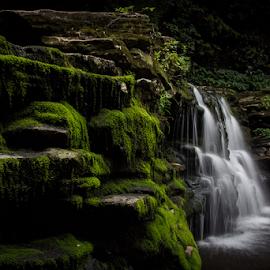 Cayuga Falls, 11' by Michael Sharp - Nature Up Close Water ( water, green, cascade, waterfall, moss, pennsylvania, ricketts glen )