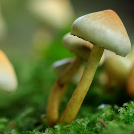Green Colony by Nico Carbajales - Nature Up Close Mushrooms & Fungi