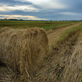 Harvest Fields by Kelvin Shutter - Landscapes Prairies, Meadows & Fields