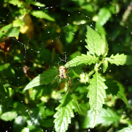 by Drago Ilisinovic - Nature Up Close Webs