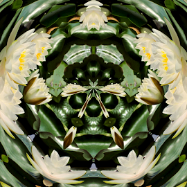 Water Lilies in the Round 2 by Tina Dare - Digital Art Abstract ( abstract, patterns, nature, manipulated, designs, distorted, circle, flowers, shapes )