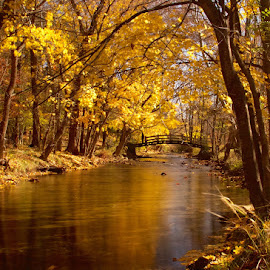 Valley Creek by Jerry Keefer - Landscapes Waterscapes ( valley forge, fall colors, creek, trees, yellow, bridge )