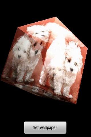 玩免費休閒APP|下載3 차원 귀여운 강아지 app不用錢|硬是要APP