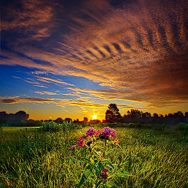 Setting with the Sun by Phil Koch - Landscapes Prairies, Meadows & Fields ( vertical, photograph, farmland, yellow, leaves, love, sky, nature, tree, autumn, orange, twilight, agriculture, horizon, portrait, dawn, environment, season, national geographic, serene, trees, floral, inspirational, wisconsin, natural light, phil koch, spring, photography, sun, farm, horizons, inspired, clouds, office, park, green, scenic, morning, shadows, field, red, blue, sunset, fall, peace, meadow, summer, sunrise, earth, landscapes )