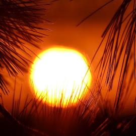 by MaryAnn Sterner - Landscapes Sunsets & Sunrises
