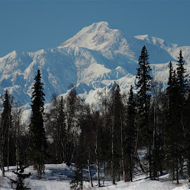 Denali by Laura Lowrey - Landscapes Mountains & Hills ( denali mt mckinley winter snow mountain trees alaska,  )
