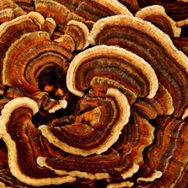 Fungi Patterns by Janet Lyle - Nature Up Close Mushrooms & Fungi ( fungi, mushrooms )