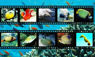 Screenshot of Best Sea Animals