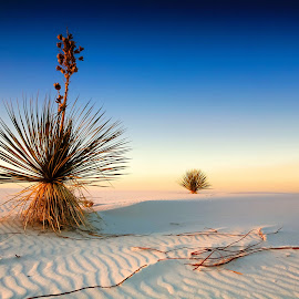 White Sands by Tom DiMatteo - Landscapes Sunsets & Sunrises
